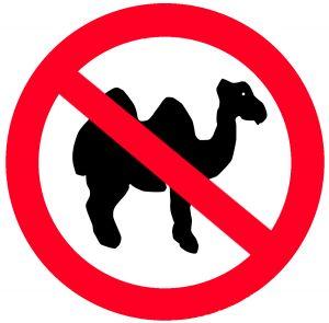 1143471_camels